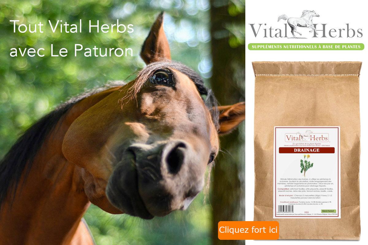 Vital Herbs - Le Paturon
