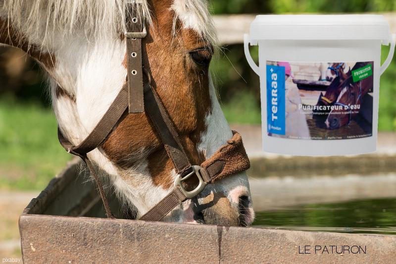 Purificateur eau cheval abreuvoir - Le Paturon