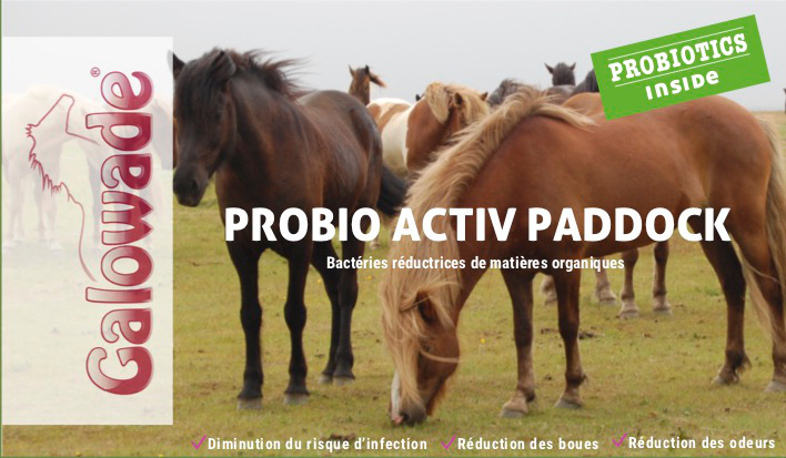Activation prairie probio cheval - Galowade - Le Paturon