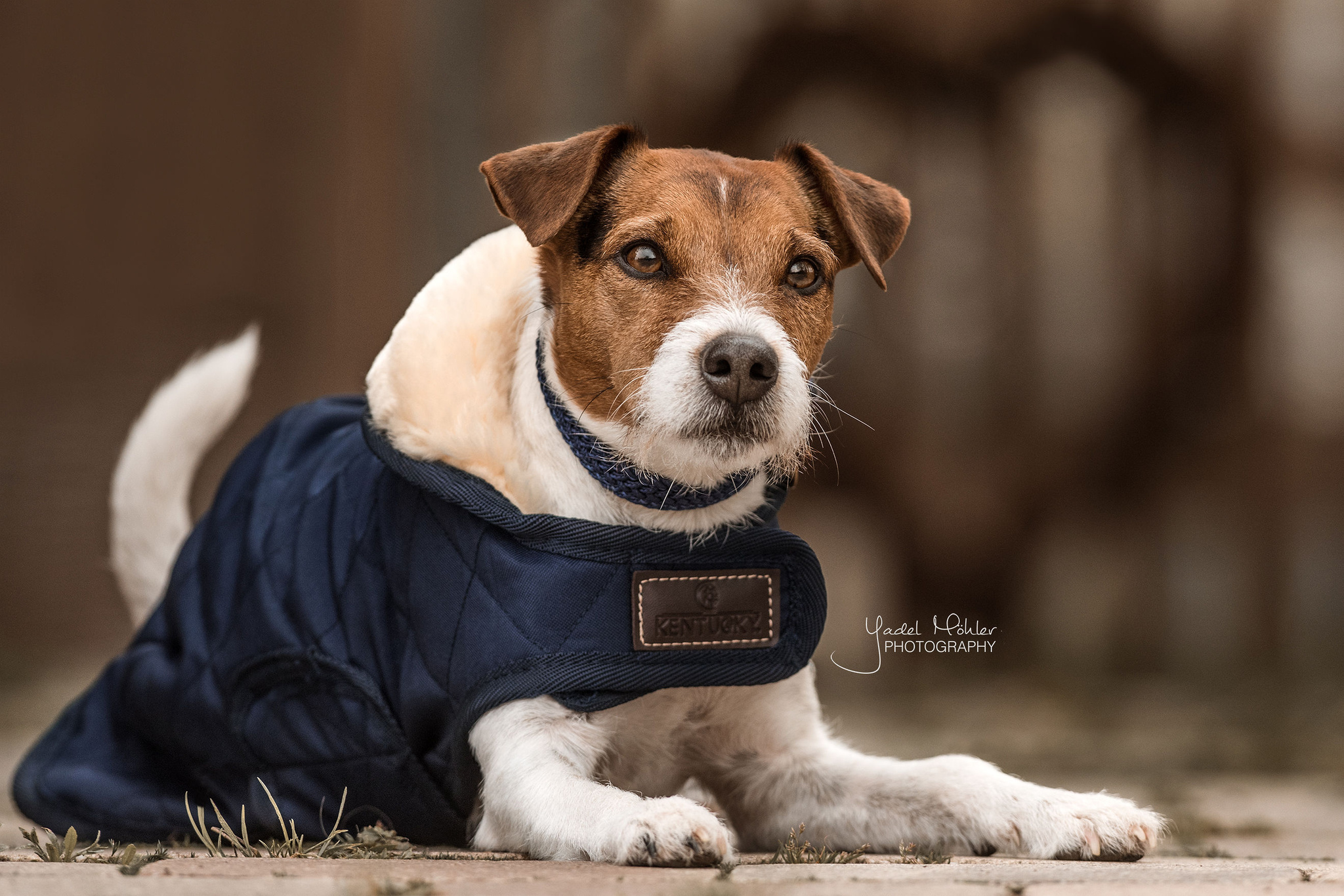 manteau chien couverture chien kentucky